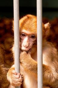 Het aapje van De Rode Draad, door stichting AAp Fanny Hill gedoopt